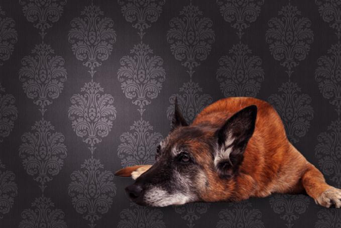 Dog against brown pattern wallpaper background
