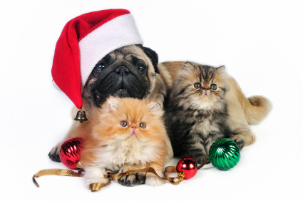 Dog wearing a Santa hat with kittens in front
