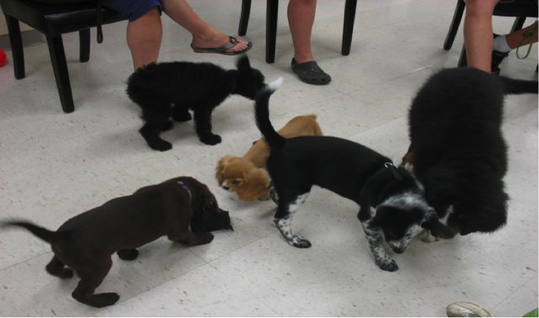 Puppies playing indoors