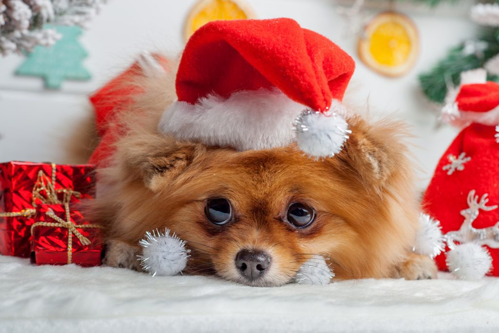 Dog wearing a Santa hat surrounded by Christmas decorations