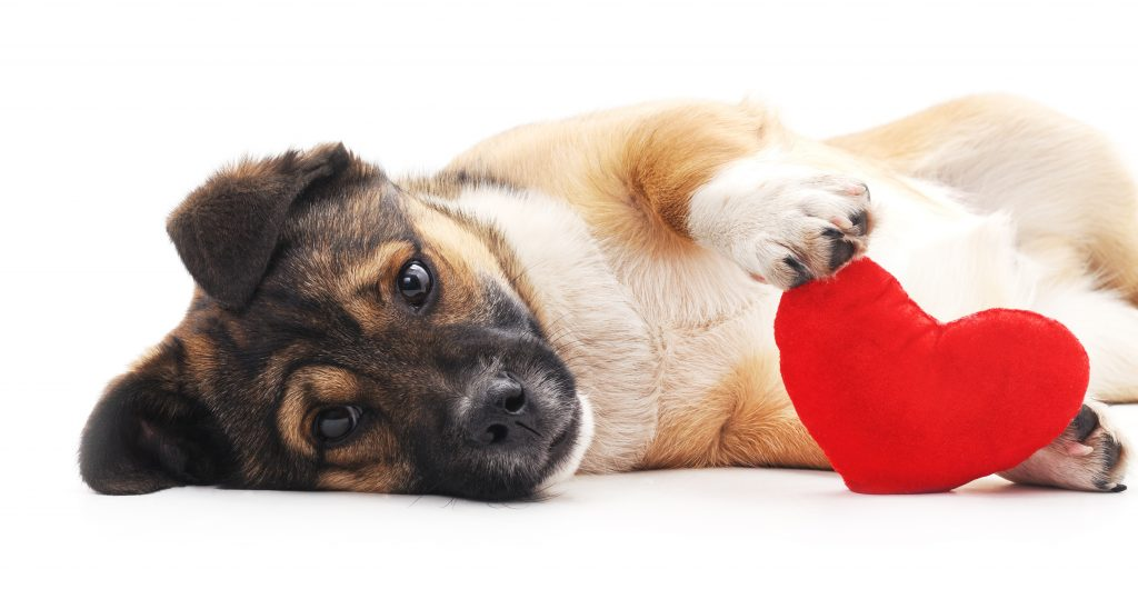 heart worm disease