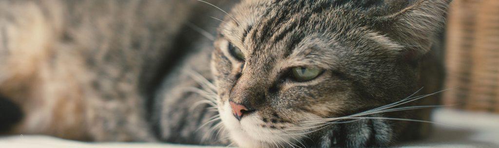 Cat Deworming Baxter Animal Hospital