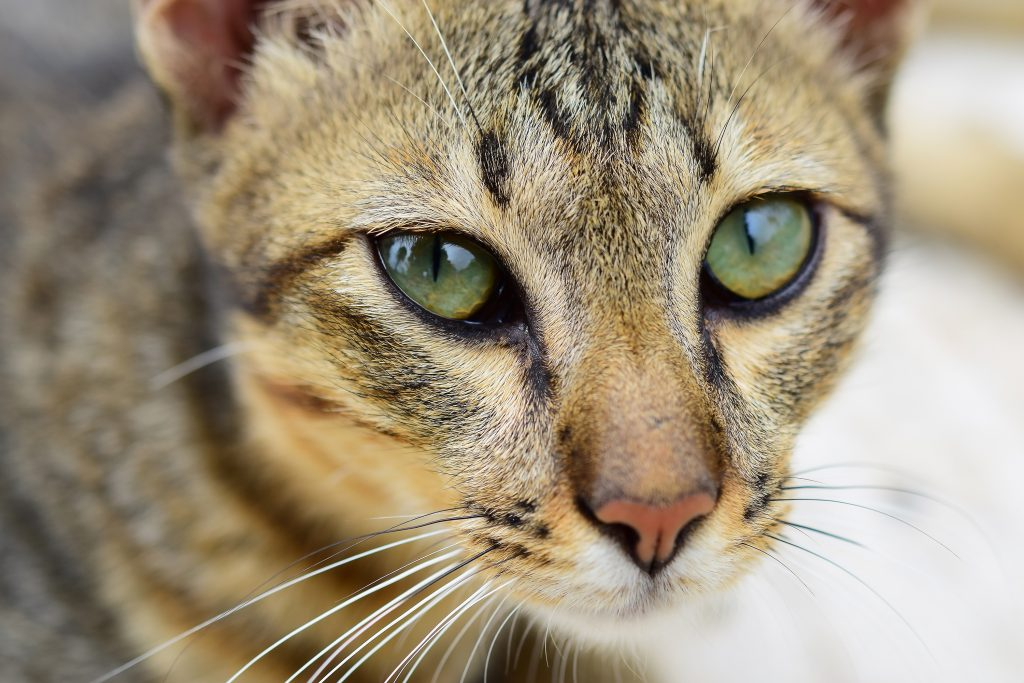 cat-deworming-blog