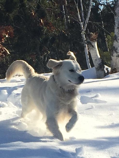 dog-bio