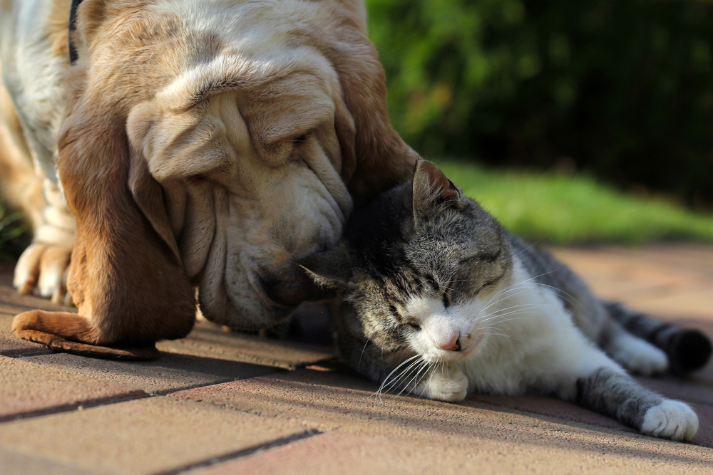 dog and cat bonding