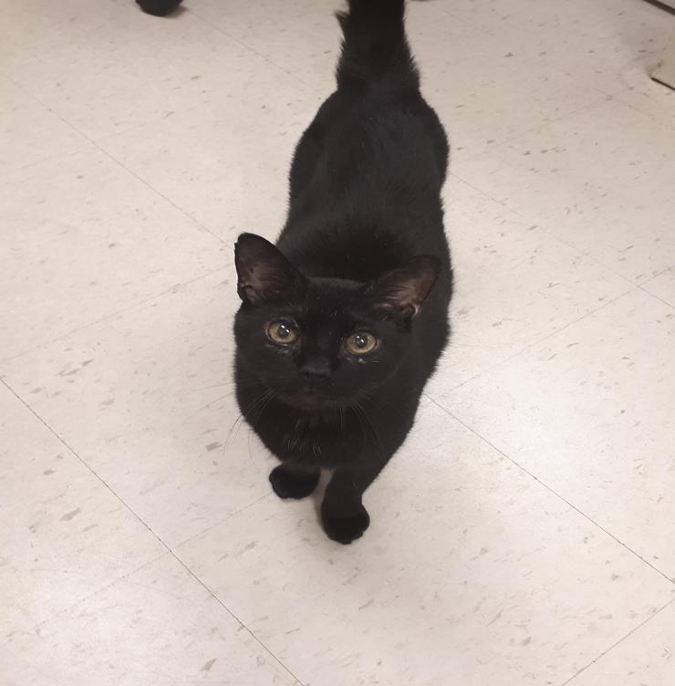 black cat steve