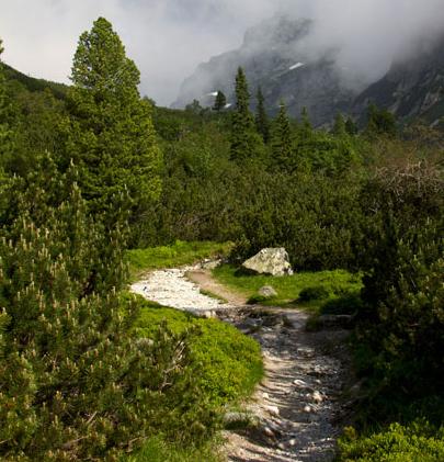 Hiking trail with Blastomycosis