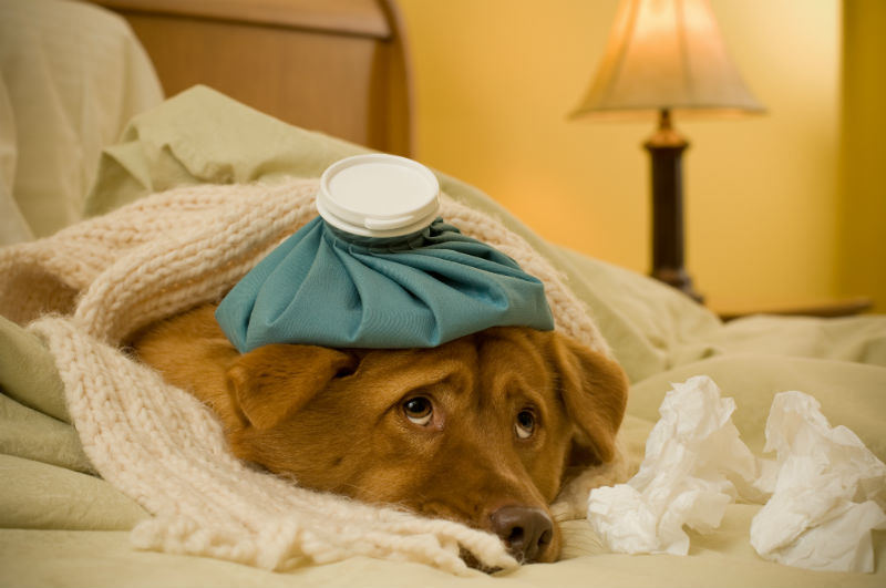 What You Need to Know About Canine Influenza
