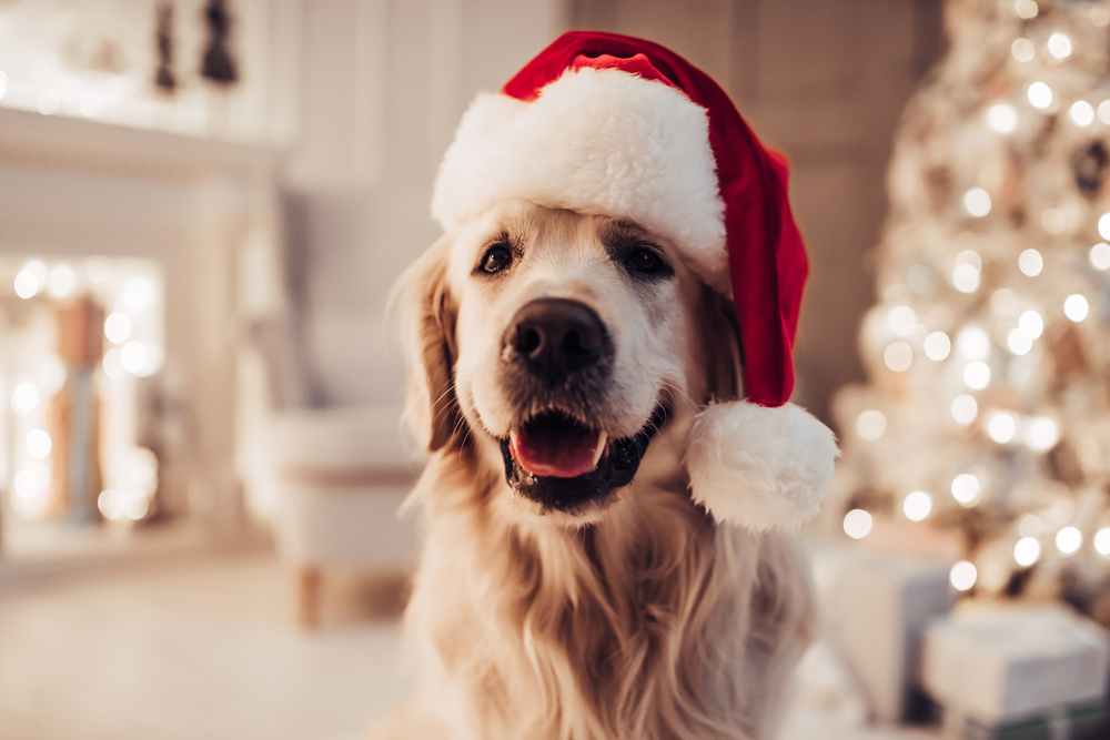 Dog wearing a Santa hat with a Christmas tree in the background