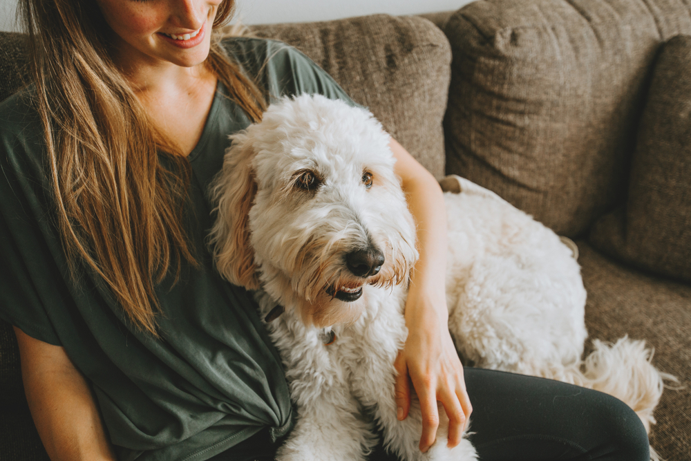 Owner sitting with dog on the couch